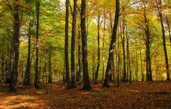 تور جنگل راش ۲۱ آبان