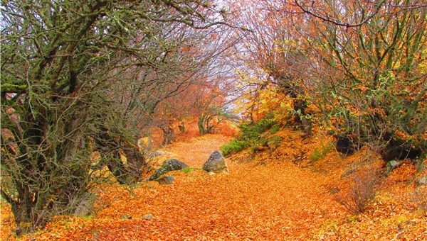 جنگل انجیلی را بهتر بشناسیم