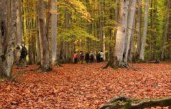 تور جنگل انجیلی ۱۰ آذر