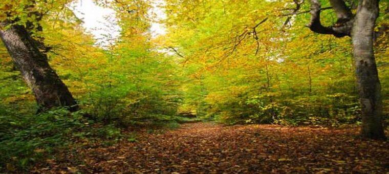 جنگل الیمستان بر فراسوی زیبایی
