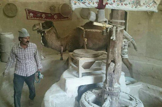 آسیاب شتر