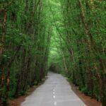 تور جنگل و ساحل گیسوم