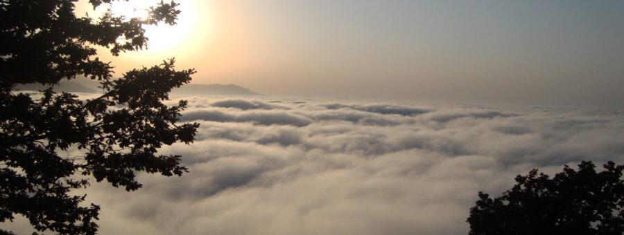 جنگل رویایی ابر