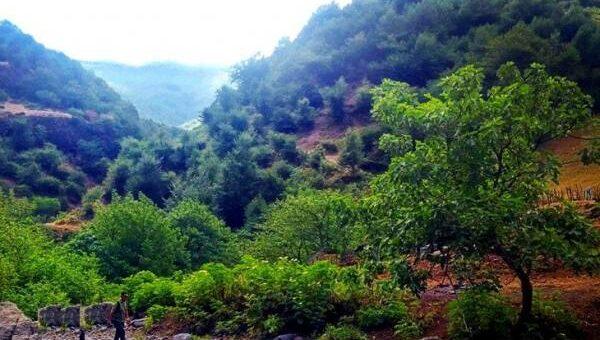 جنگل زیبای مشه